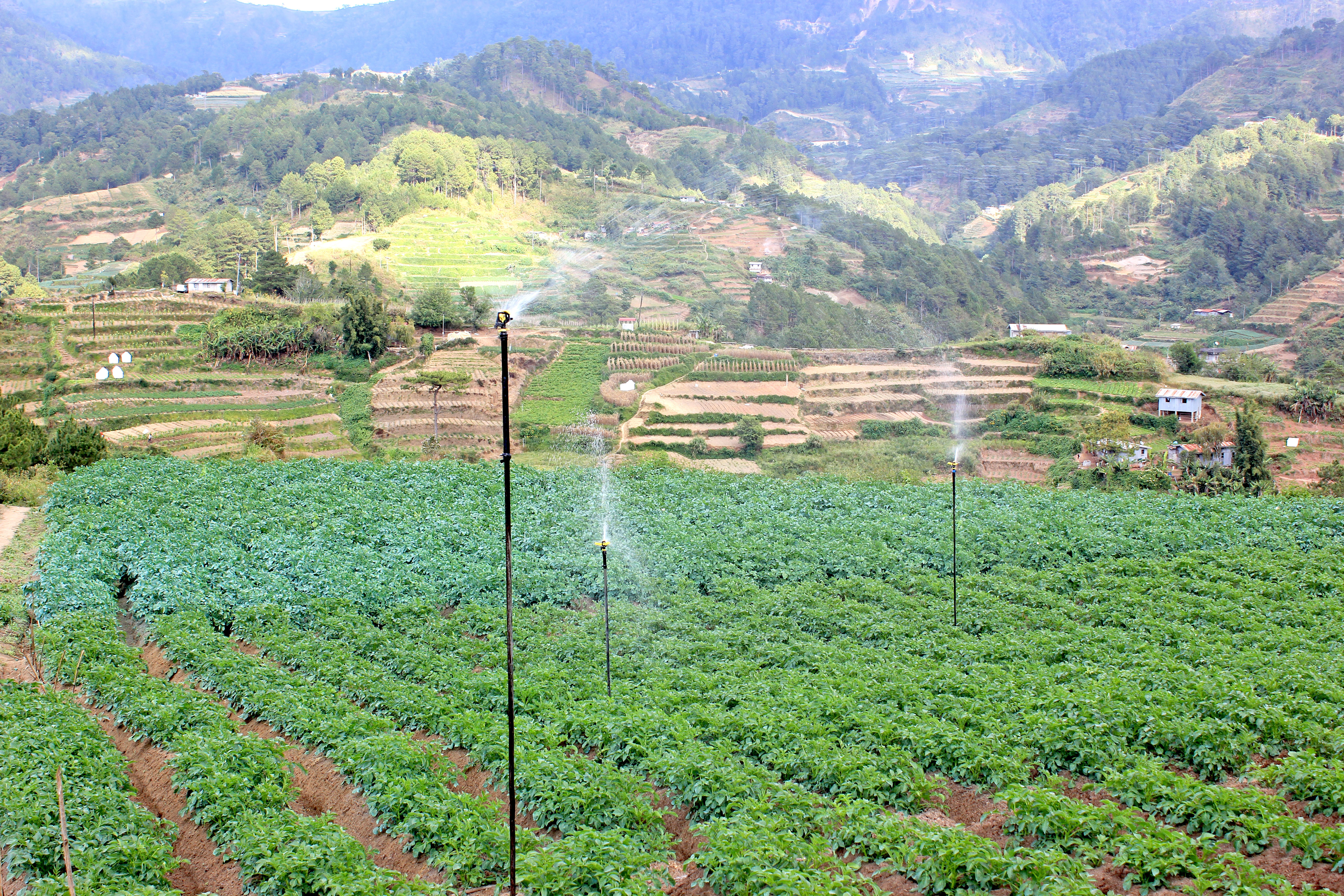 Fields of vegetables are being irrigated up in the terraces of the Cordillera region. Photo: National Irrigation Authority