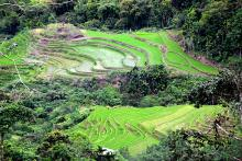 These picturesque rice terraces along the outskirts of Kiangan, Ifugao form part of the service area of Bagnit CIS.